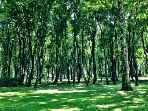 park Kaunas